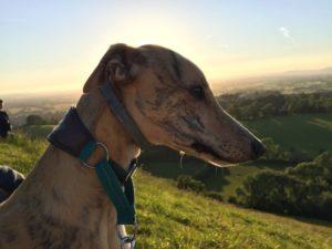 Amika, Tierkommunikation Hund auf dem Tor in Glastonbury