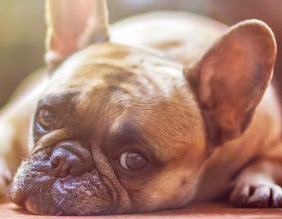 Tierheilpraxis & Ernährungsberatung