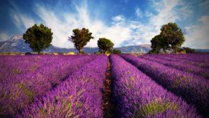 Amika, Lavendel, ätherische Öle