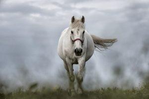 Amika, Krafttier Pferd
